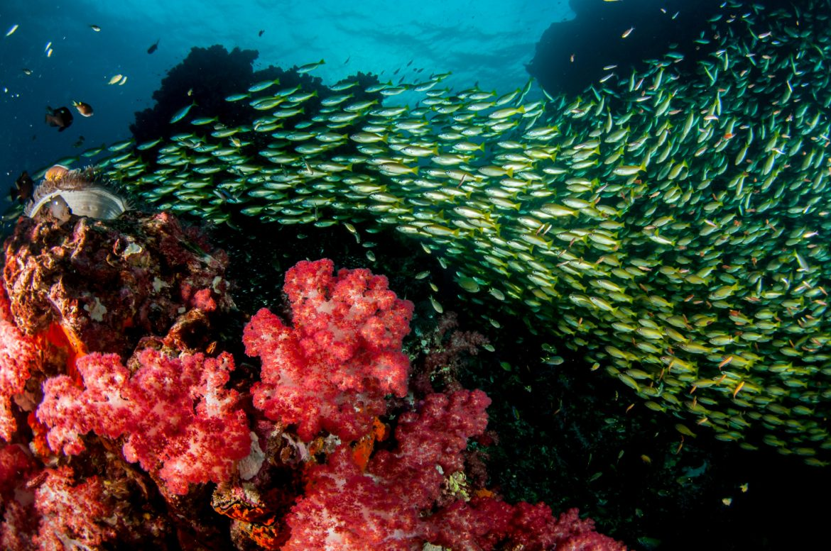 Scuba diving in thailand a balancing act - Where to dive in thailand ...