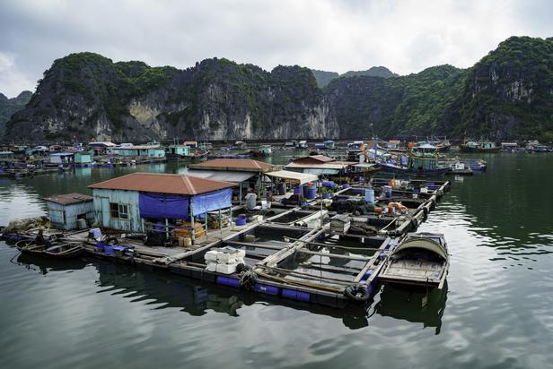 Floating Village in Cat Ba