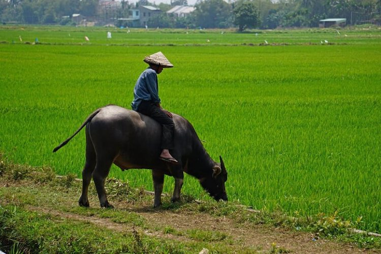 hoi-an- 7-unusual-things-to-do-in- Vietnam-on-holiday