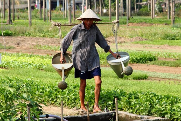 Hoi an coconut island - vietnam